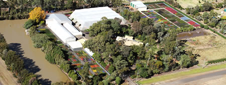 Ausplant Nursery, Backyard Treats, Darling Downs Turf, Dalby Queensland